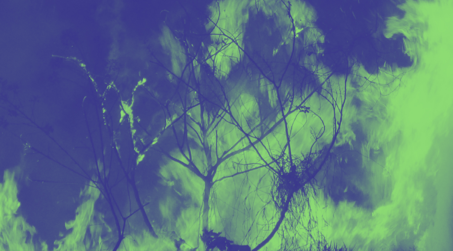 An image of a burning tree
